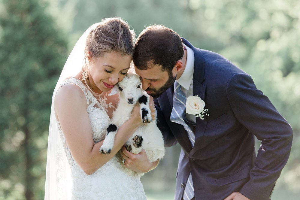 bride and groom with baby goat
